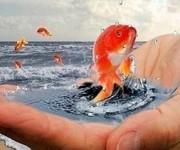 Золотая рыбка | Исполнение мечты.