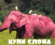 Купи слона. Тренинг по продажам